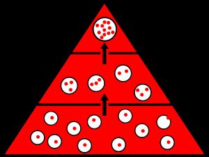 生体濃縮 イメージ図