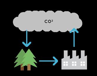 study_illust_biomass_05_01